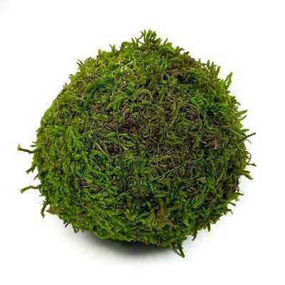 Sheet Moss Ball Vase Filler (Set of 12) - Wayfair