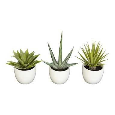 Faux Potted Southwest Plants, Set of 3 - Pottery Barn Teen