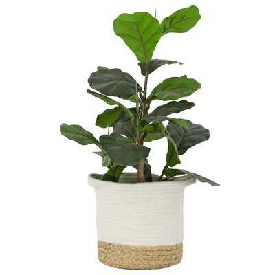 Artificial Fiddle Leaf Fig Plant Basket - Wayfair