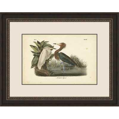 'Reddish Egret' by John Audubon Framed Watercolor Painting Print - Wayfair