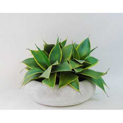 "7"" Artificial Agave Succulent in Planter - Wayfair"
