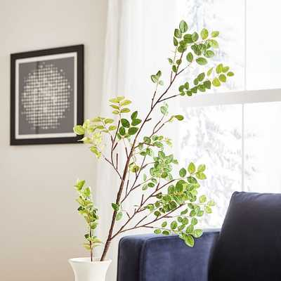 Bean Leaf Branch - West Elm