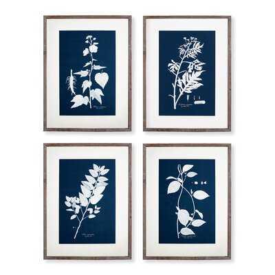 'Cyano Botanical Leaf Study' - 4 Piece Picture Frame Print Set on Paper - Wayfair