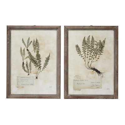 "Large, Rectangular French Vintage Botanical Prints In Natural Wood Frames, Set Of 2: 20.5"" X 27.5"" Each - Picture Frame Drawing Print Set on Wood - Wayfair"