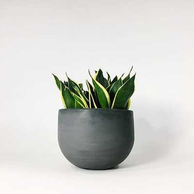"SETTLEWELL Concrete Bowl Planter, 6"", Dark Gray - West Elm"
