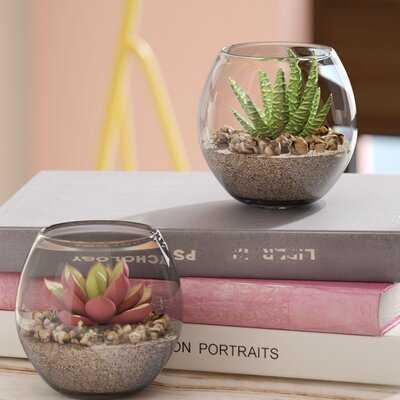 2 Piece Succulent Plant in Pot Set - Wayfair