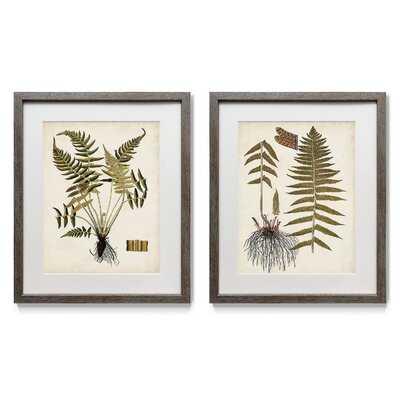 Fern Botanical IV - 2 Piece Picture Frame Print Set on Paper - Wayfair