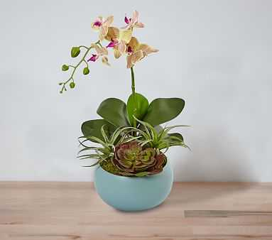 Orchid and Succulents - Pottery Barn Kids