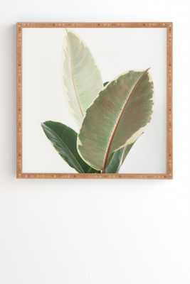 "Ficus Tineke by Cassia Beck - Framed Wall Art Bamboo 30"" x 30"" - Wander Print Co."