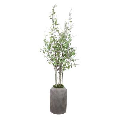 Aldis Potted River Birch - Hudsonhill Foundry