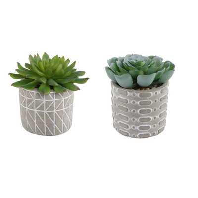 FLORA BUNDA 4 in. Set of 2 Succulent in Pattern Cement Pot - Home Depot