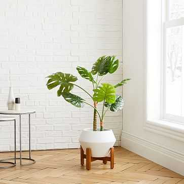 Monstera Botanical + Ilya Planter Small White Bundle - West Elm