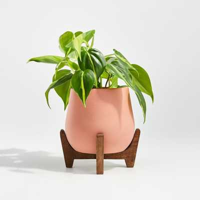 Evie Small Planter with Stand - Crate and Barrel