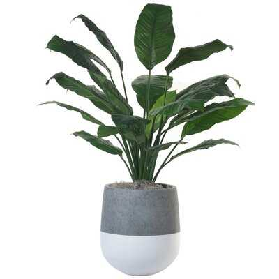 "36"" Artificial Plant in Planter - Wayfair"