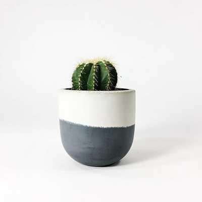 "SETTLEWELL Concrete Bowl Planter, 4"", Dark Gray Flip - West Elm"