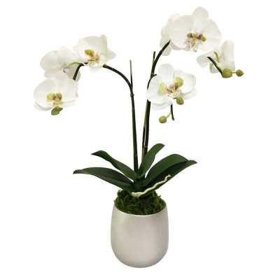 Orchids Centerpiece in Planter Base Color: Silver, Flowers/Leaves Color: Purple - Perigold