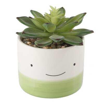 Desktop Succulent Plant in Pot - AllModern