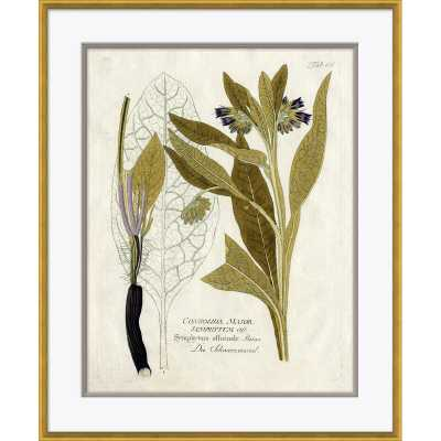 Soicher Marin '18th Century Botanical Engravings' - Picture Frame Print on Paper - Perigold