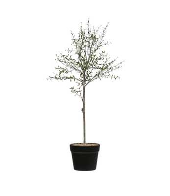 "29""H Faux Thyme Topiary in Pot - Nomad Home"