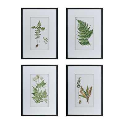 A & B Home Botanical Fern Framed Wall Art (Set of 4) - Home Depot