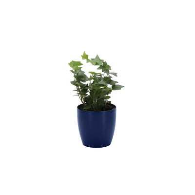 "Thorsen's Greenhouse 7"" Live Ivy Plant in Pot Base Color: Iris - Perigold"