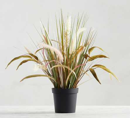 Faux Potted Wild Grass, Natural - Medium - Pottery Barn