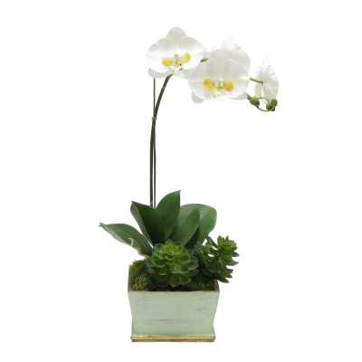 Phalaenopsis Orchid Floral Arrangement in Planter Base Color: Gray Green/Gold - Perigold