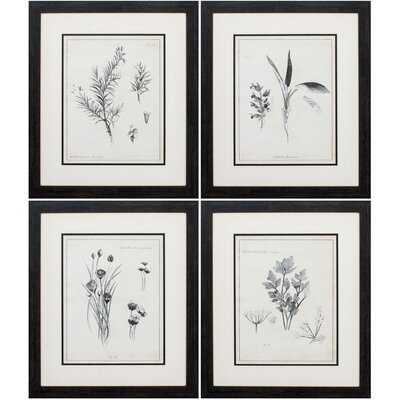 LATIN BOTANICALS S/4 - 4 Piece Picture Frame Print Set - Wayfair