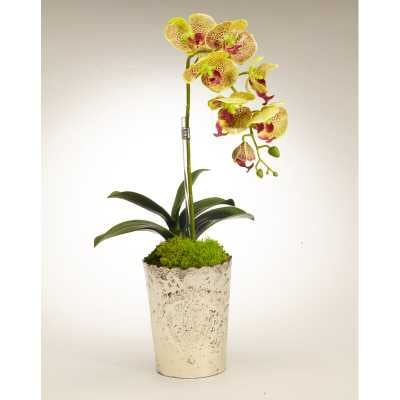 Orchid Floral Arrangement in Vintage Mercury Glass Flower Color: Green - Perigold