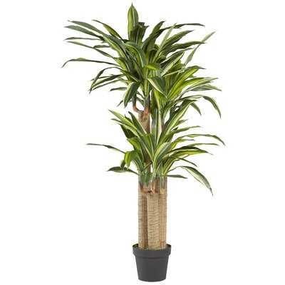 Dracaena Tree in Pot Liner - Wayfair