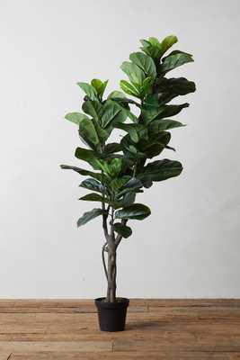 Faux Fiddle Leaf Fig Tree, 5' - Anthropologie