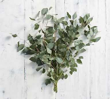 Live Silver Dollar Eucalyptus Branches, 3 Bunches - Pottery Barn