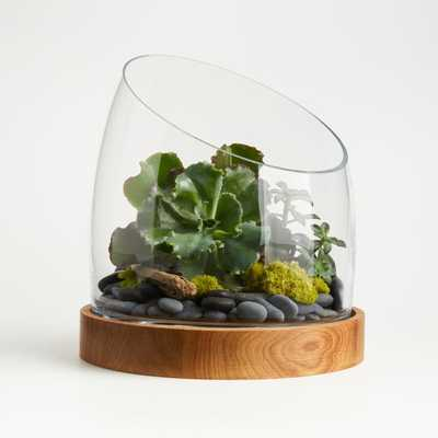 Large Slant Terrarium with Wood Base - Crate and Barrel