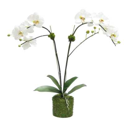 Bougainvillea Artificial Double Phalaenopsis Orchid Centerpiece in Pot Flower Color: White/Green - Perigold