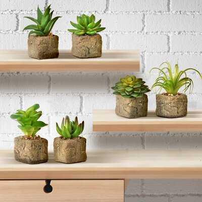 6 Artificial Agave Succulent in Pot Set - Wayfair