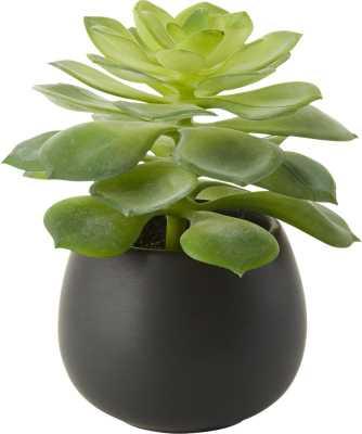 Faux Potted Echeveria Succulent - CB2