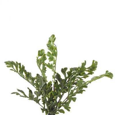 Floral Arrangement Fern Bush - Wayfair