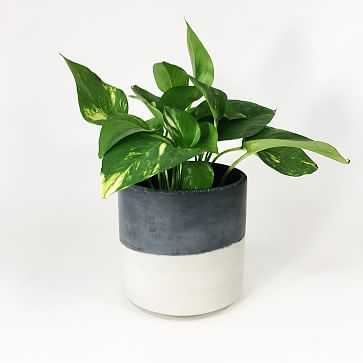 Straight-Sided Concrete Pot, Medium, Dark Gray Two Tone - West Elm