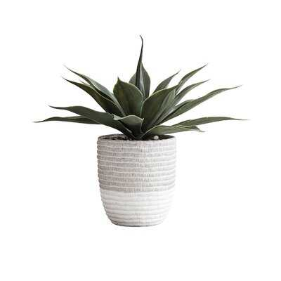 9.5'' Artificial Succulent Plant in Pot - Wayfair