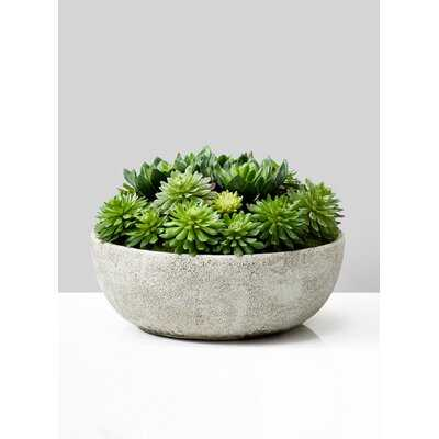 Evergreen Succulent Pot - Wayfair