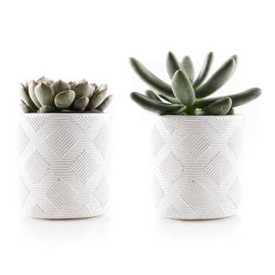 KAWAHARA NURSERY 2.5 in. Assorted Succulent Set in White Weave Pot (2-Pack) - Home Depot