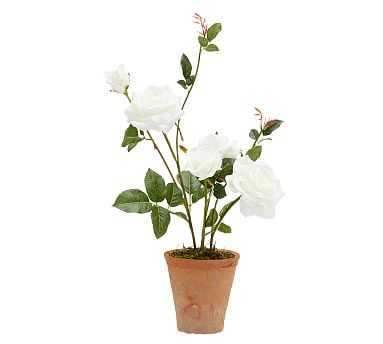 Faux Potted Roses, White - Small - Pottery Barn