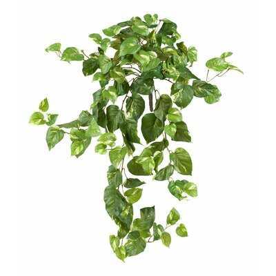 Pothos Ivy Hanging Plant - Wayfair