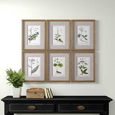 'Botanical Sketches' Picture Frame Graphic Art Set - Birch Lane