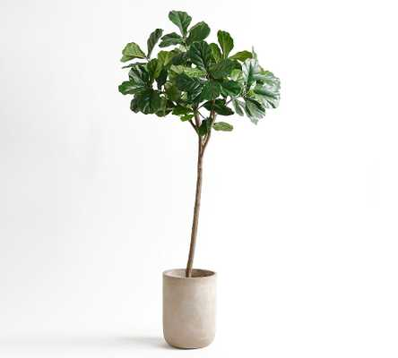 Faux Potted Fiddle Leaf Fig Tree - 7' - Pottery Barn