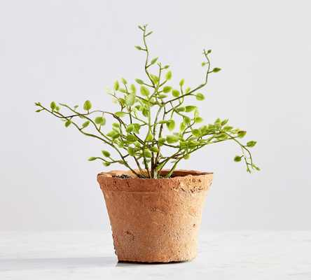 "Faux Potted Mini Angel Vine Fern, 7""H - Pottery Barn"