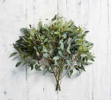 Live Seeded Eucalyptus Branches, 3 Bunches - Pottery Barn