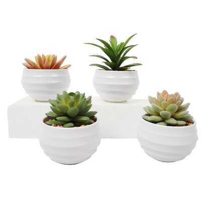4 Piece Assorted Cactus Succulent in Pot Set - Wayfair