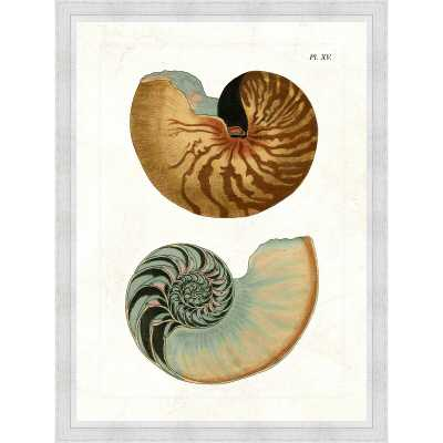 Vintage Print Gallery 'Double Shell II' Framed Graphic Art Print in Brown/White - Perigold