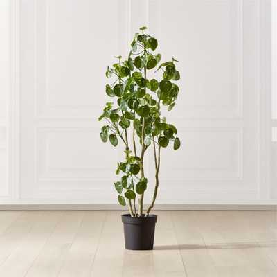 Potted Coin Tree 5' - CB2